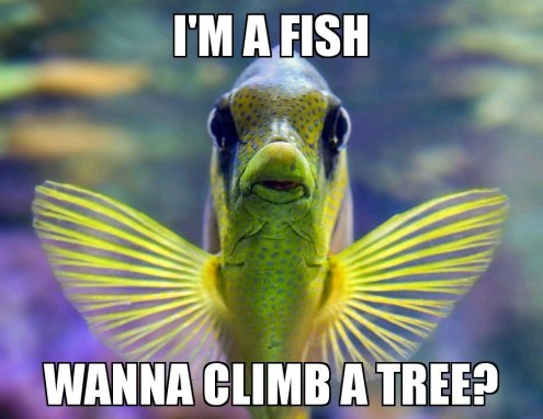 if you judge a fish by its ability to climb a tree