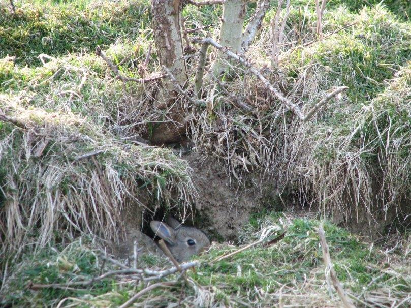 farndale-bunnies-2