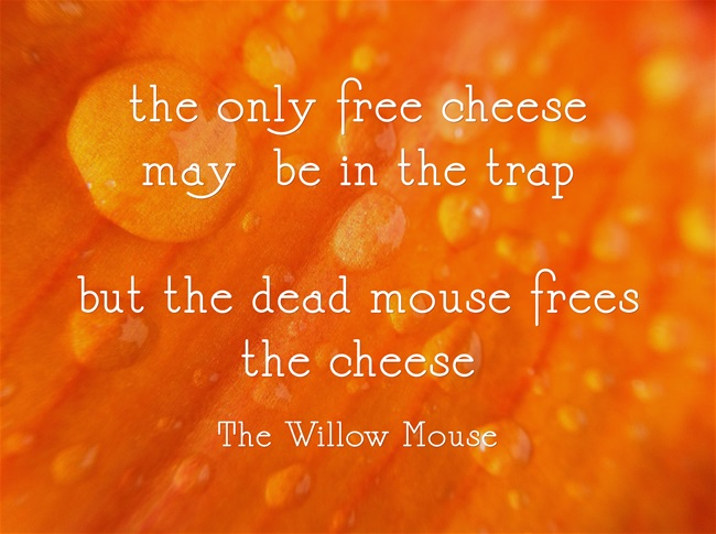 the dead mouse frees the cheese